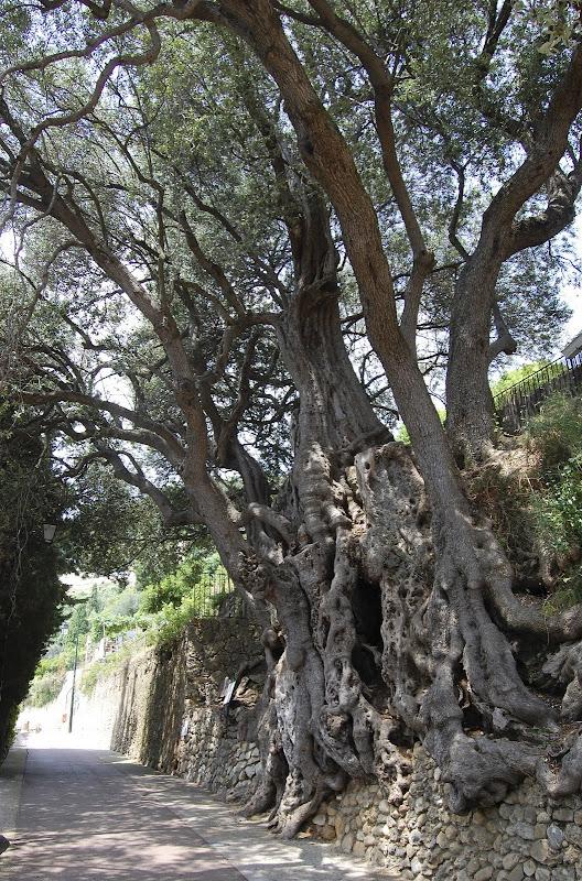 Wanhapuu